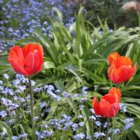 Wiosenny obrazek