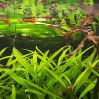 rośliny wodne ....