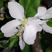 Kwitnące drzewko w markecie