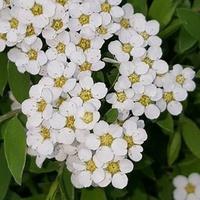 białe drobniutkie