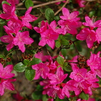 kwiaty majowe