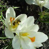Pszczoły Już Pracu