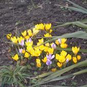 Wiosna W Ogrodzie 4