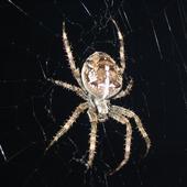 Wszędobylskie pająki