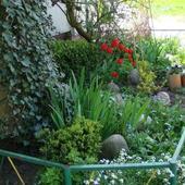 Ogródek P.Steni