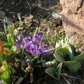 Pierwsze Kwiatki Na