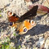 Raj Dla Motyli