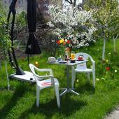Tulipanki W Trawie