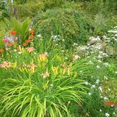 Kwiaty Nad Oczkiem W