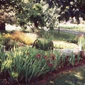 Igraszki światła i cienia w ogrodzie.