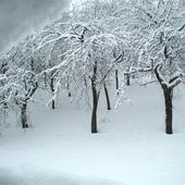 Zima 2005....