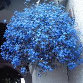 Kwiaty Tereski