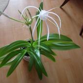 jaki to kwiatek?