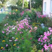 Kwiatki w ogródku