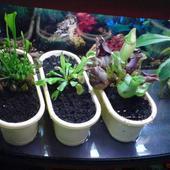 Rośliny Owadożerne