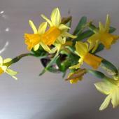 Wiosenne Kwiaty..