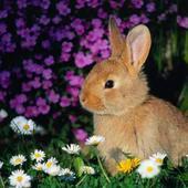 Króliczek wśród kwiatków