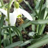 Wiosna 09