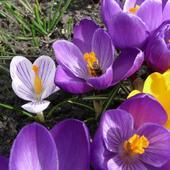 Wiosna'09