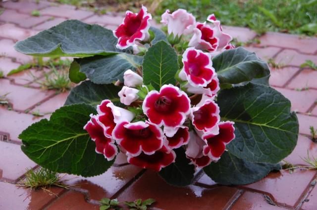 kwiatek 3