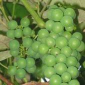 A może winogronko :-)