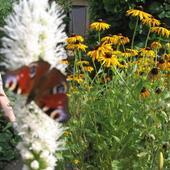 liatra i jej przyjaciel motylek