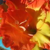 Kwiatuszek Mieczyka