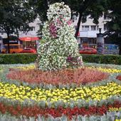Kwiaty We Lwowie