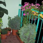 Moj Ogrod
