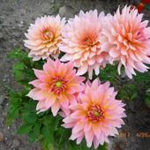 Urlopowe Kwiaty