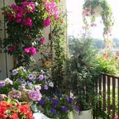 W Ogródku Na Balkon