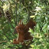 Wiewiórka Smakuje S