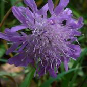 leśny kwiat