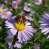 Marcinek I Pszczół