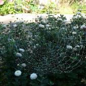 poranki ubierają kwiaty w perły,jesien nadchodzi3