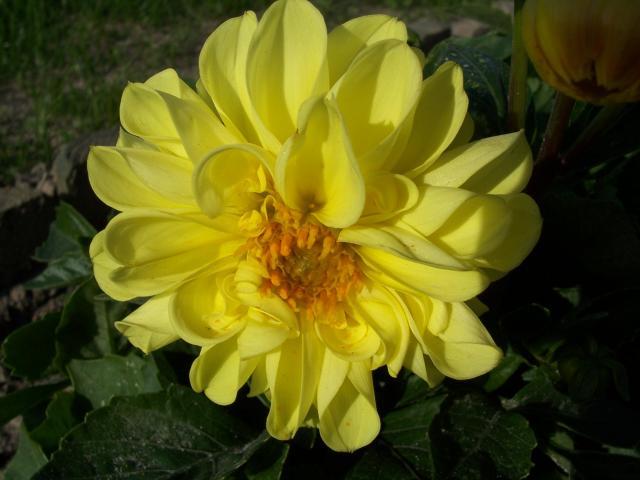 kwiatuszkowe sloneczko ;-)
