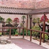 Kolekcja drzewek bonsai