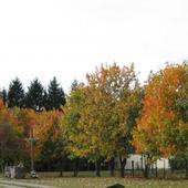 Kolory Jesieni...