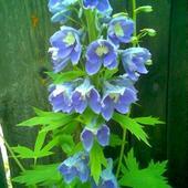 Kwiatek?