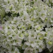 Kwiaty Z Ogrodu