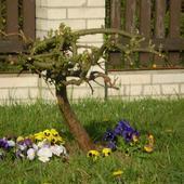 Małe Drzewko I Brat
