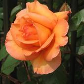Najpiękniejsze Ró�