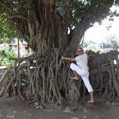 Straszne Drzewo