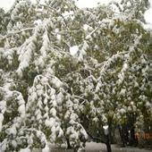 Zima Zaskoczyła Jab