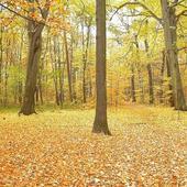 Droga Przez Las :)