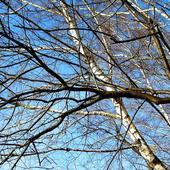 Gołe Drzewka :)