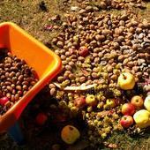 Jesienne skarby,jabłka,orzechy