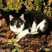 mój kot wygrzewa się w jesiennym słoneczku