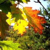 ...jeszcze trochę jesiennych kolorków...