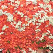 Paleta Barw Jesieni